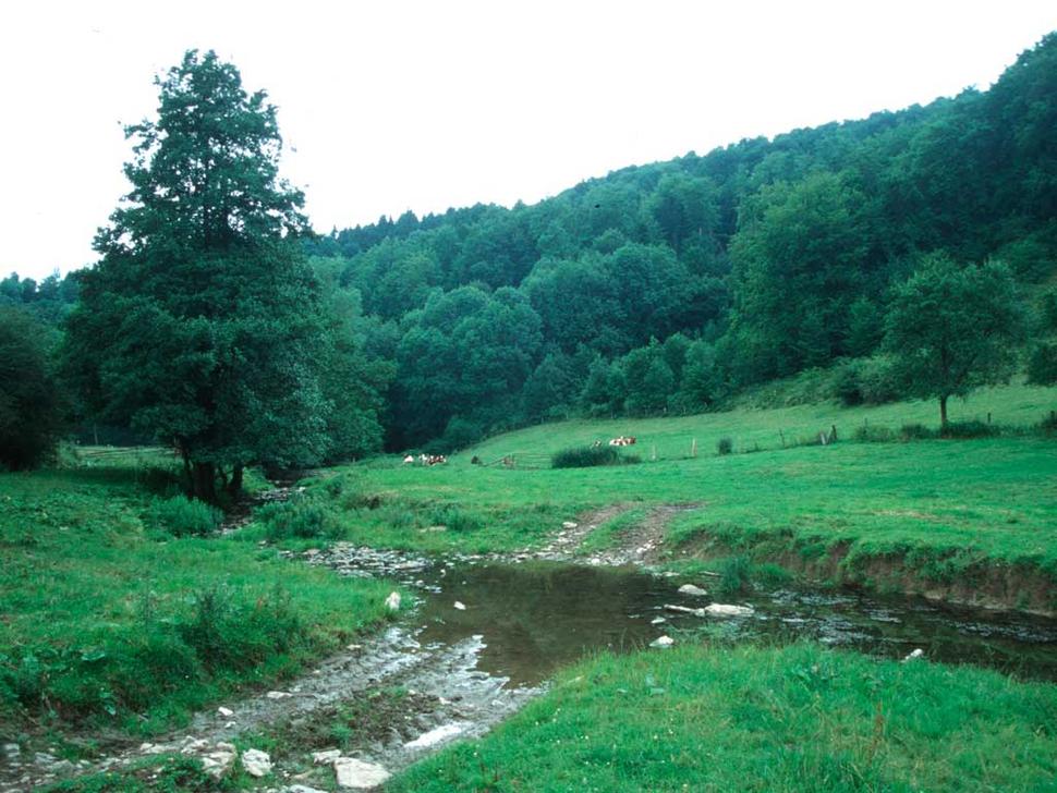 Sauertal, Lichtenau (Foto: Archiv NRW-Stiftung)