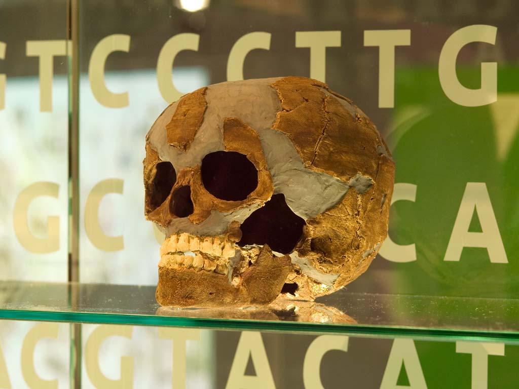 Neanderthal Museum (Foto: Werner Stapelfeldt)