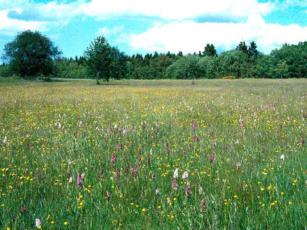 Sistig Krekeler Heide, Kall (Foto: Wolfgang Schumacher)
