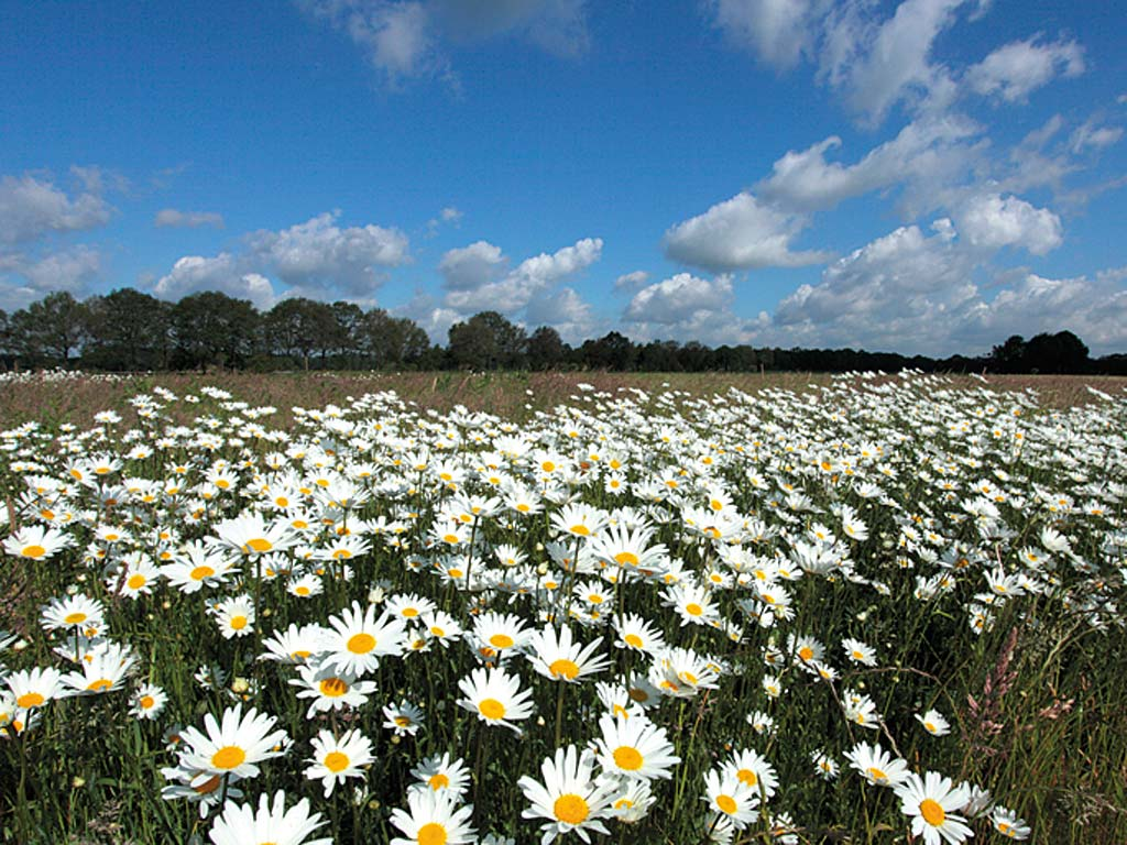 Dingdener Heide (Foto: Hans Glader )