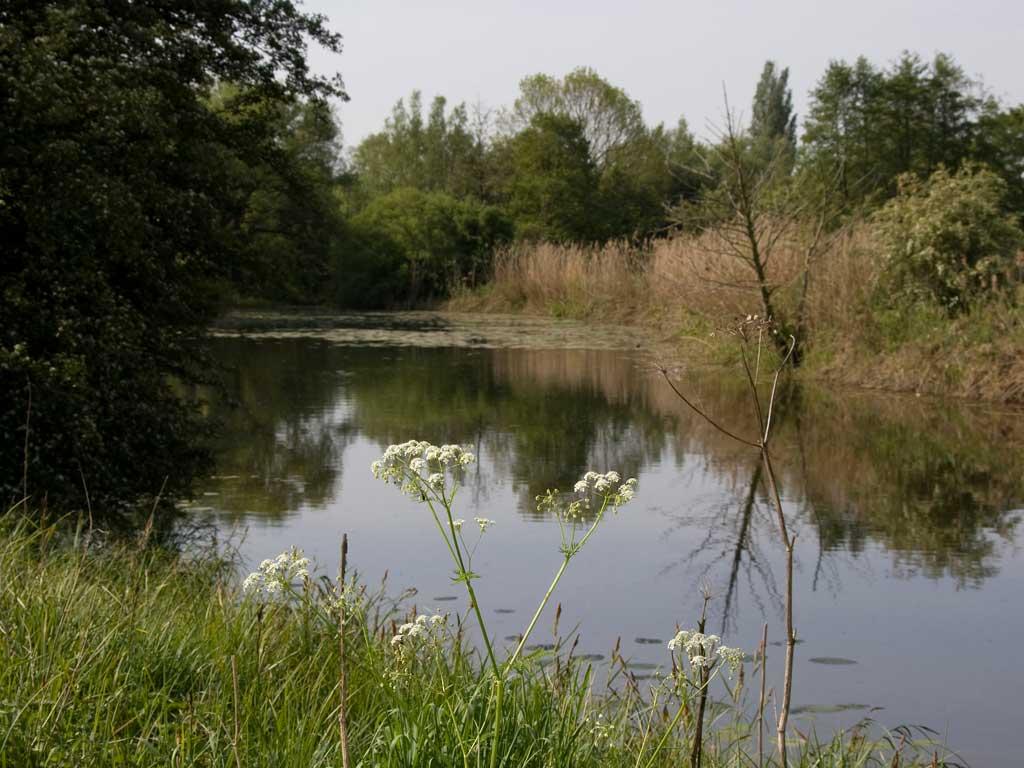 Lippe-Auen, (Foto: Bernd Hegert)