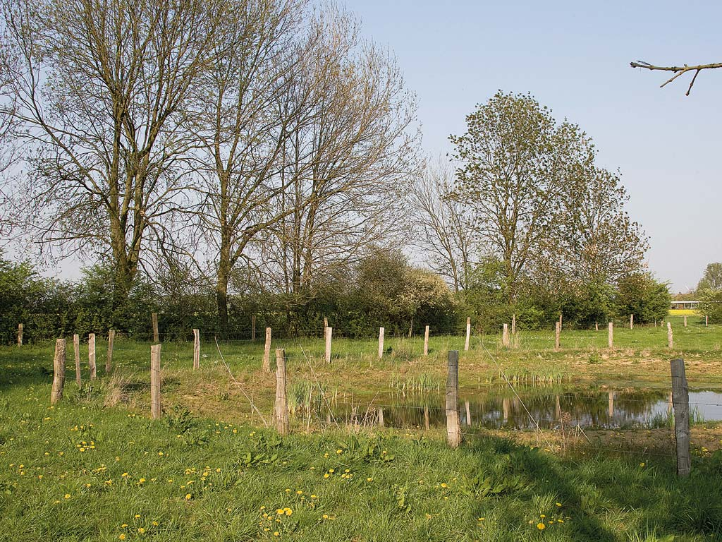 Uelzener Heide (Foto: Bernd Hegert)